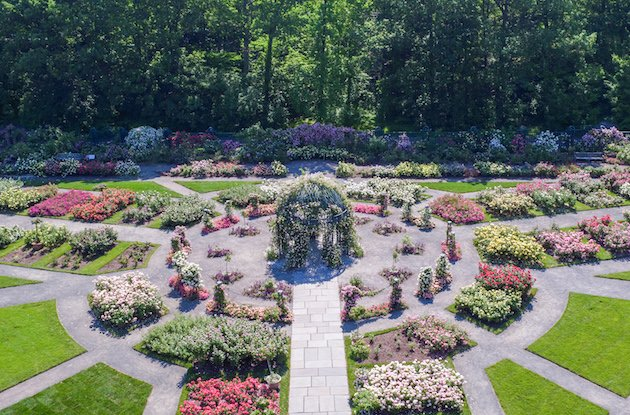 New York Botanical Garden Launches NYBG at Home Educational Hub