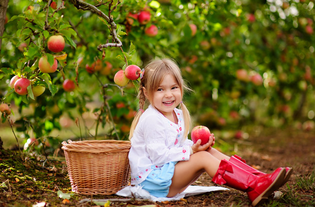 Apple Picking in New York: Your Family Will Love These 11 Orchards