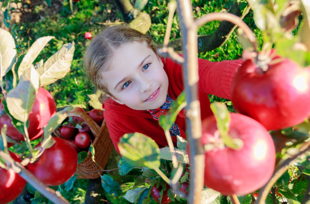 Top 7 Places to Go Apple Picking in Rockland County & Nearby