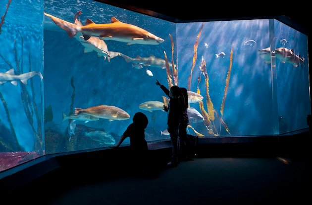 Aquariums in the New York Area