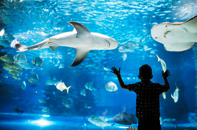 The Top 6 Aquariums Near Rockland County for Families