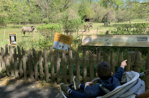 Why the Bronx Zoo is an Awesome Family Destination