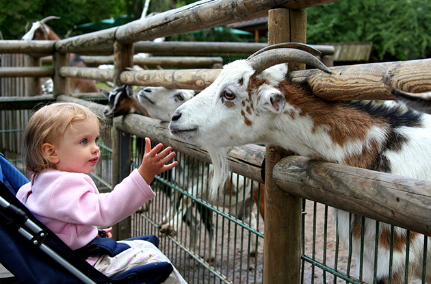 Zoos, Nature Centers, and Botanical Gardens in the NYC Area