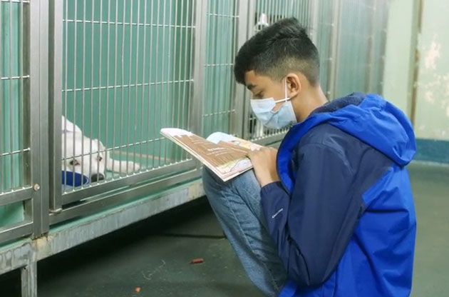 11-Year-Old Bronx Boy Brings Love and Hope to Shelter Dogs