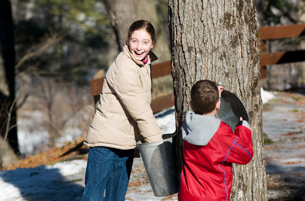 Where to Go Maple Sugaring in the New York Area