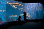 Aquariums in the New York Area