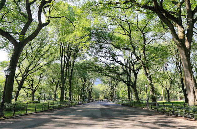 How to Explore NYC Parks from Home