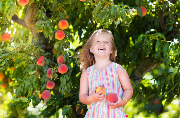 The Top 10 Places Go Peach Picking in NY, NJ, & CT