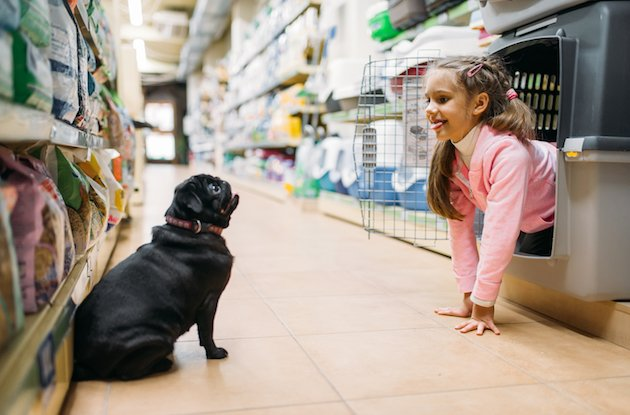 Pet Stores in and Around NYC