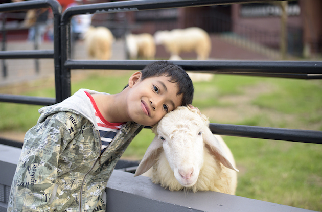 The Best Petting Zoos for Kids in NYC and Long Island