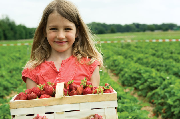 Go Berry Picking in New York, New Jersey, and Connecticut