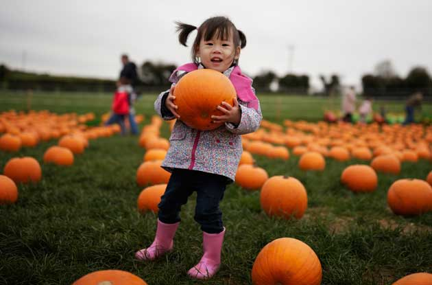 20 Pumpkin Patches in NYC & Nearby That Kids of All Ages Will Love
