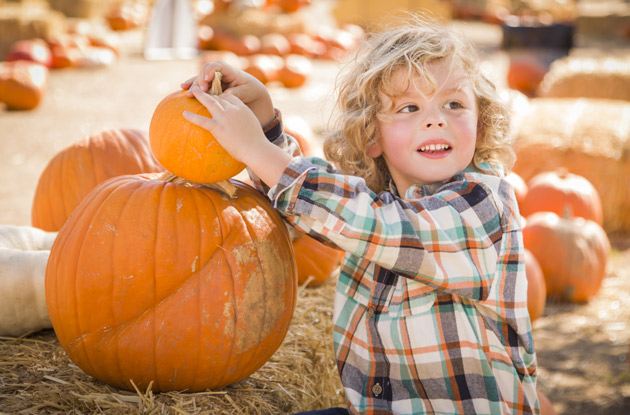 The Top 11 Places to Go Pumpkin Picking in Rockland County, NY & Nearby