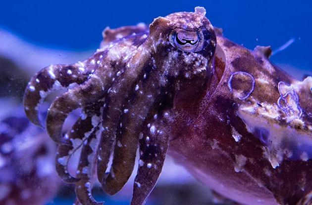 See Bizarre Yet Breathtaking Animals In Spineless, NY Aquarium's New Exhibit