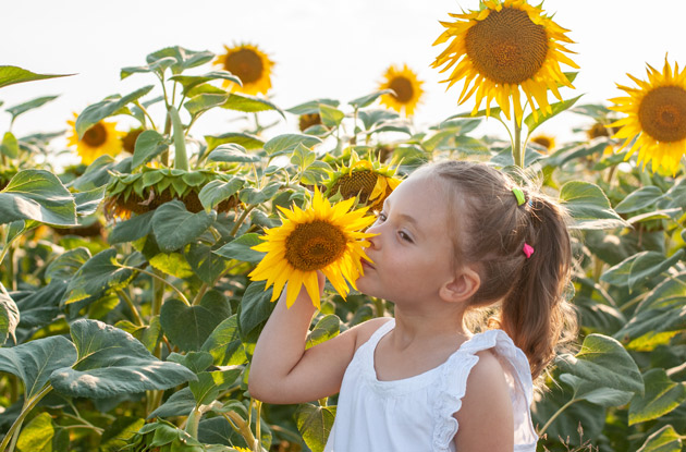These Are the Top 7 Sunflower Mazes in NJ, CT, & Long Island