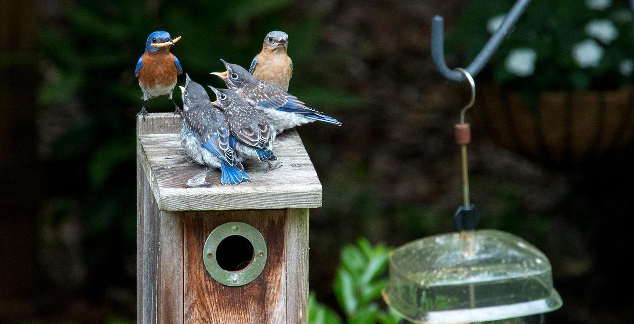Nestbox Building Outdoor Workshop at Greenwich Audubon Center