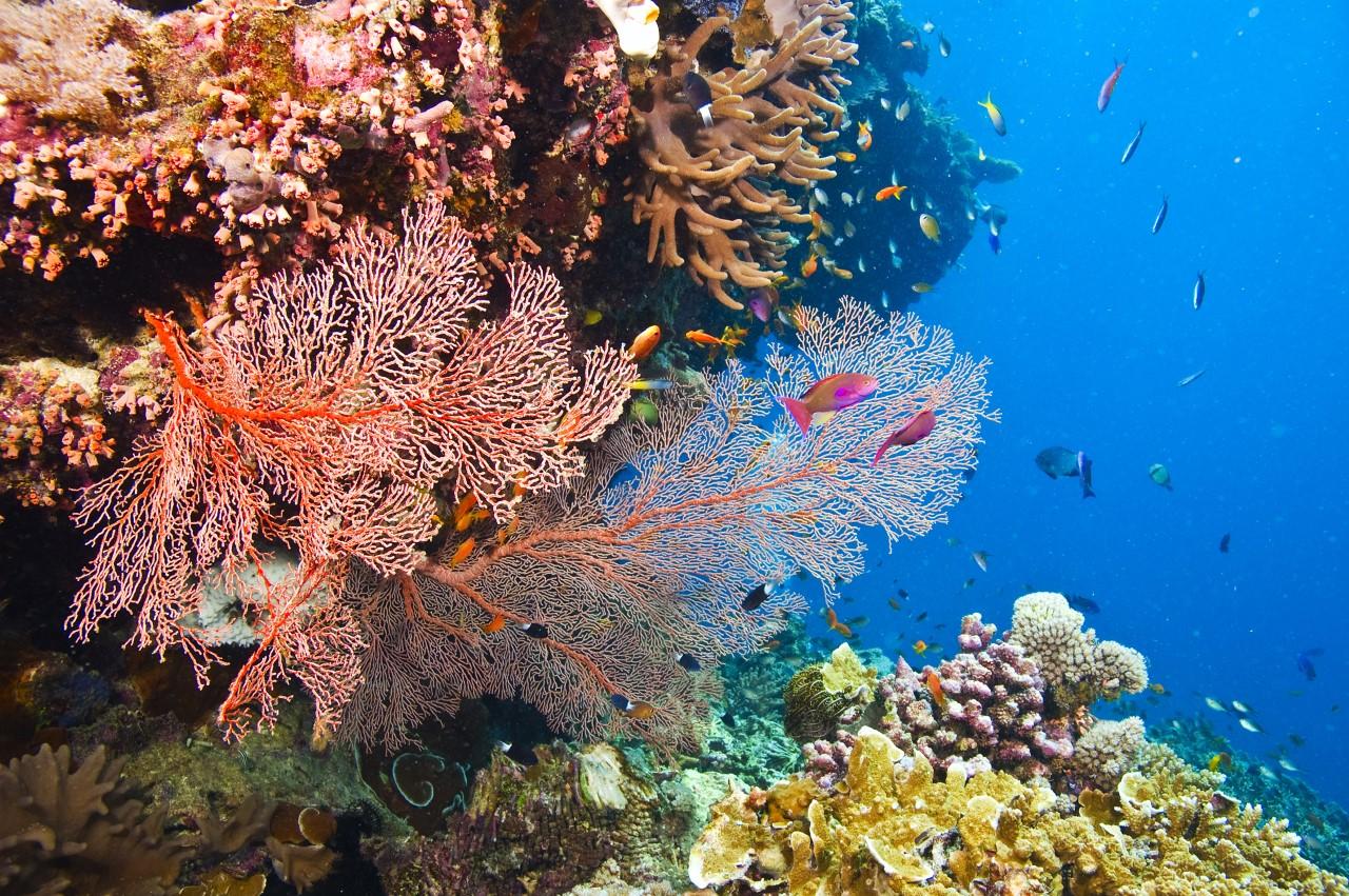 IMAX Movies: 'Great Barrier Reef' at THE MARITIME AQUARIUM AT NORWALK