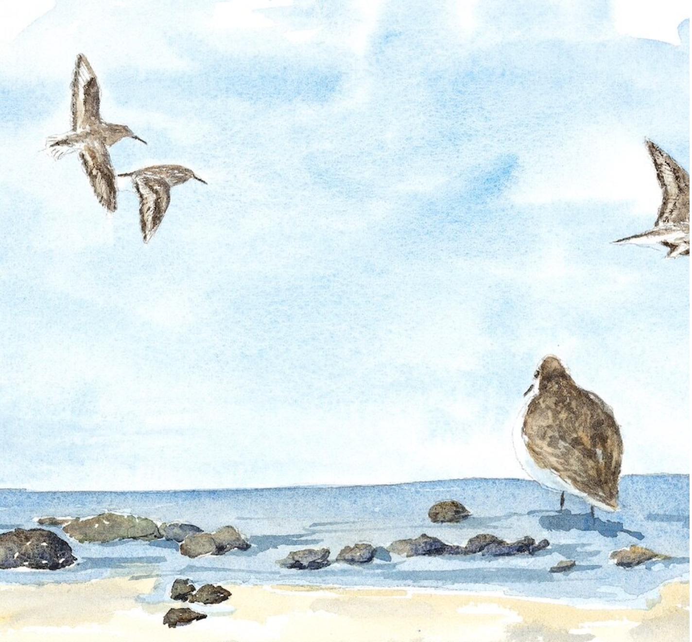 Virtual Art Workshop with Sandy McDermott: New England Animals at Bruce Museum