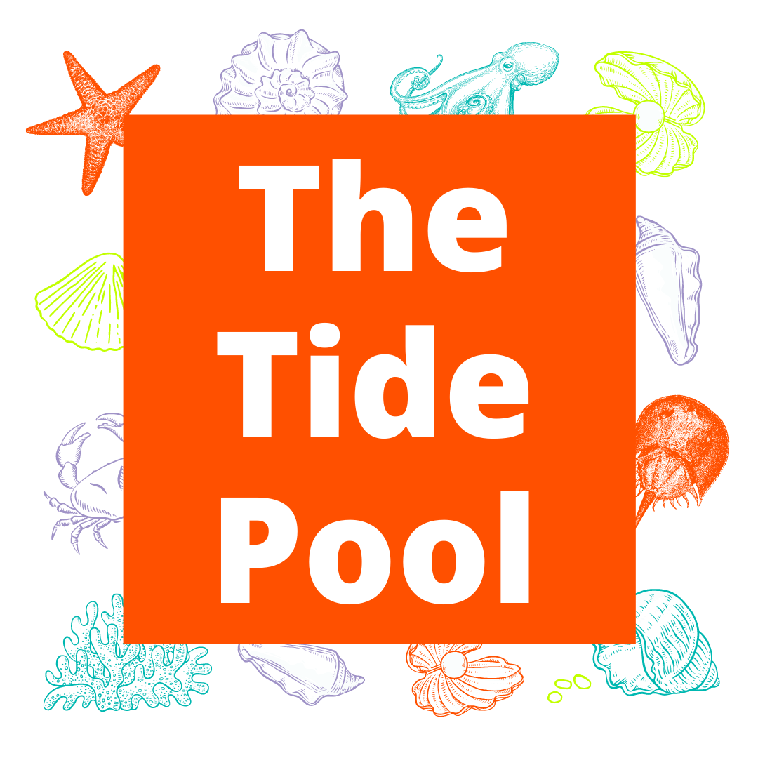 IN PERSON The Tide Pool at The Westchester Children's Museum