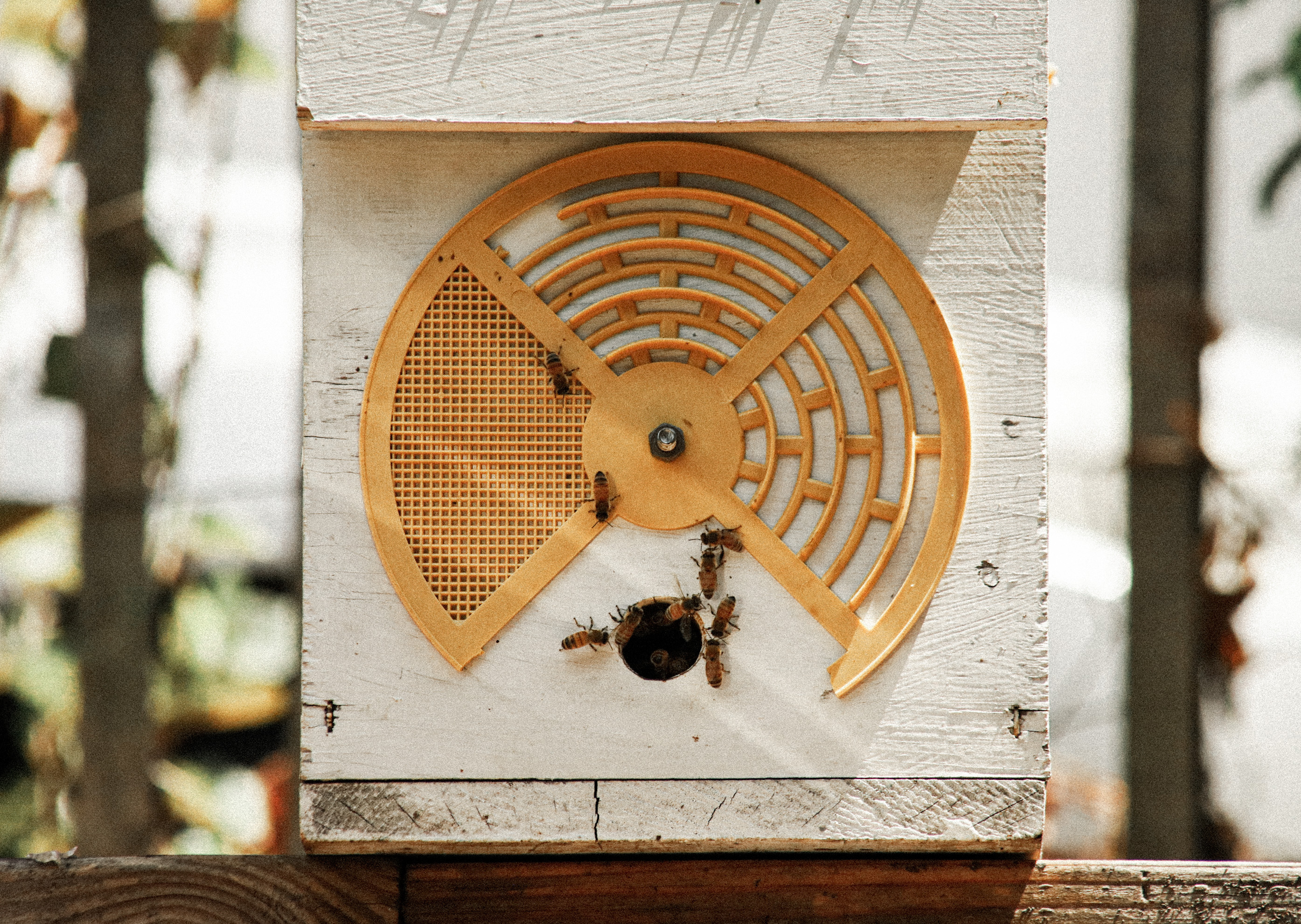 Farmhouse Family Day; Beautiful Bees at Wyckoff House Museum