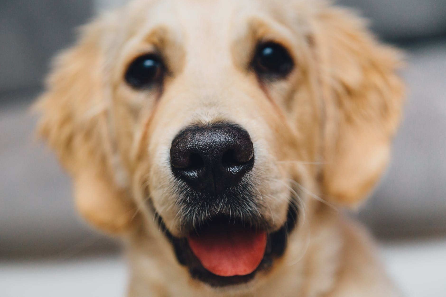 Book Time with a Dog at Patchogue-Medford Library
