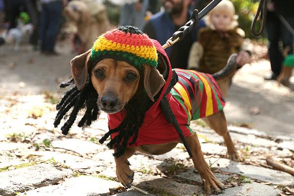 The 19th Annual Great PUPkin Dog Costume Contest at Fort Greene Park