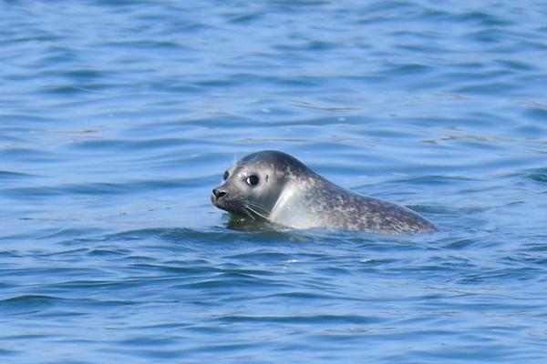 Seal-Spotting & Birding Cruises at Maritime Aquarium