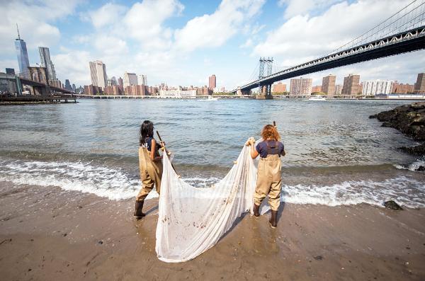 Seining at Brooklyn Bridge Park Pier 4