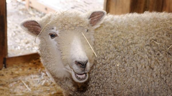 Fleece Festival at Prospect Park Zoo
