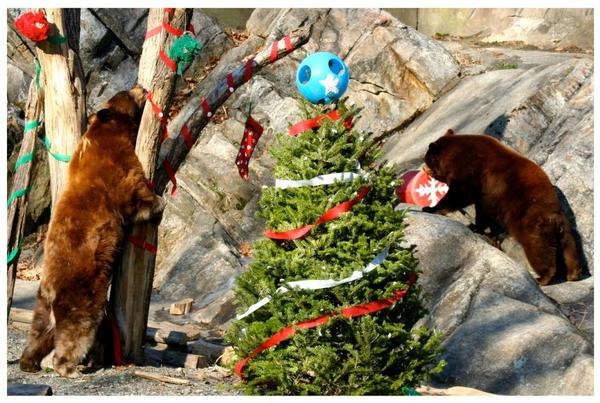 Beary Merry Holiday Party at Trailside Museums & Zoo
