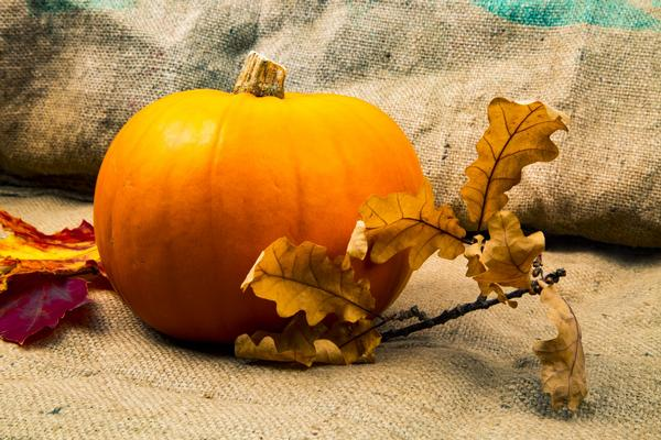 The Great Pumpkin Carving at Tenafly Nature Center