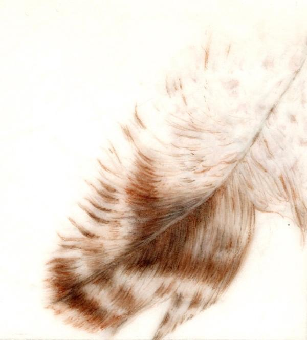 Botanical Workshop: Drawing Birds & Feathers at East End Arts