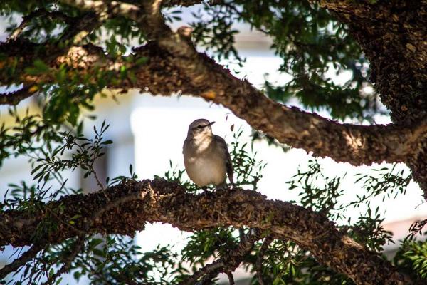 Fall Birding at Wave Hill