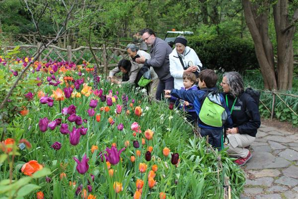 Discovery Walk for Families: Shakespeare Garden at Central Park: Belvedere Castle