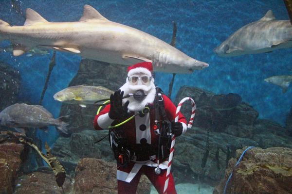 Shark-Diving Santa at THE MARITIME AQUARIUM AT NORWALK
