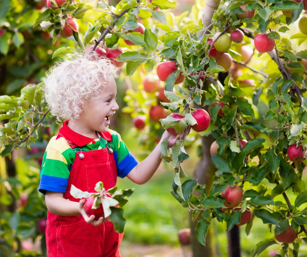 Pop-Up Stroller Strides Class & Apple-Picking at Dr. Davies Farm
