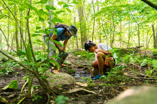 Earth Living Skills for Children: Discover Wild Spring Edibles at Threefold Educational Center