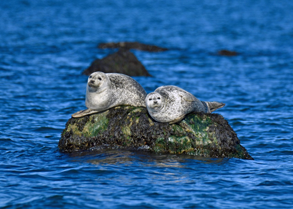 Seal-Spotting & Birding Cruises at THE MARITIME AQUARIUM AT NORWALK
