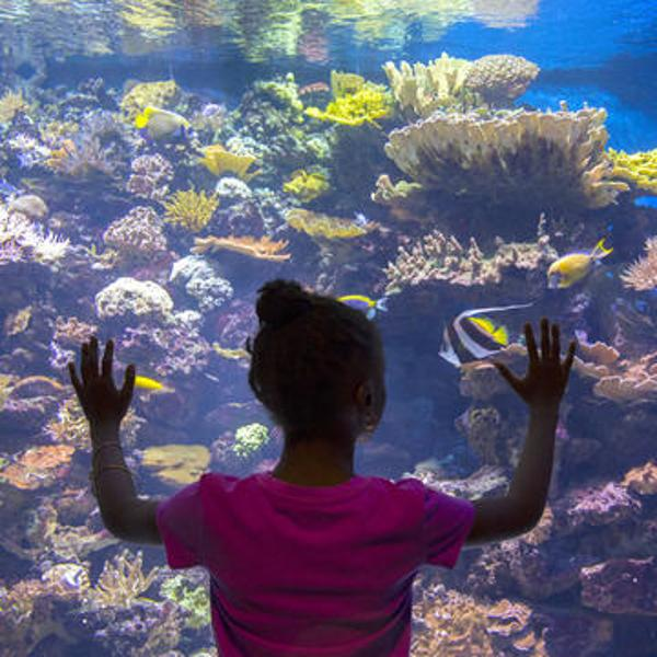 Sea Squirts: Learning with Animals at New York Aquarium