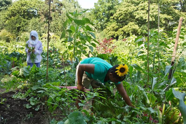 Discover Gardening at Brooklyn Botanic Garden