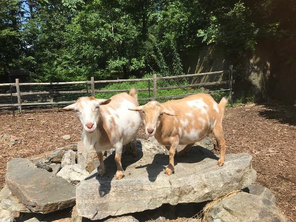 Meet the Animals at Greenburgh Nature Center