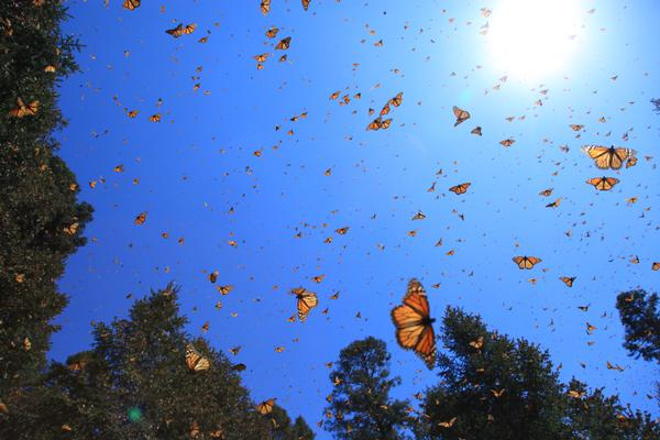 'Flight of the Butterflies 3D' at New York Hall of Science