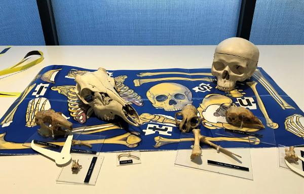 Science Saturday Workshop: Measuring Bones at Long Island Science Center