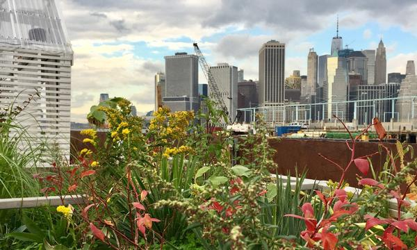 Swale, A Floating Food Forest at Brooklyn Bridge Park - Pier 6