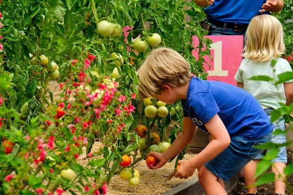 Urban Farm Exploration Days at Randall's Island Park Alliance
