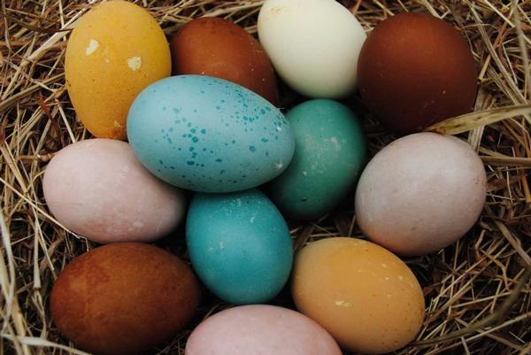 CAMOUFLAGED EGG HUNT at Tenafly Nature Center