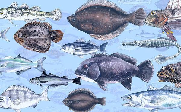 Great Fish Count: 1 Fish, 2 Fish, I Fish, You Fish at Kaiser Park