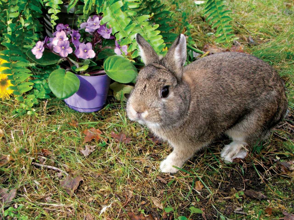 Funny Bunnies at Hudson Highlands Nature Museum's Outdoor Discovery Center