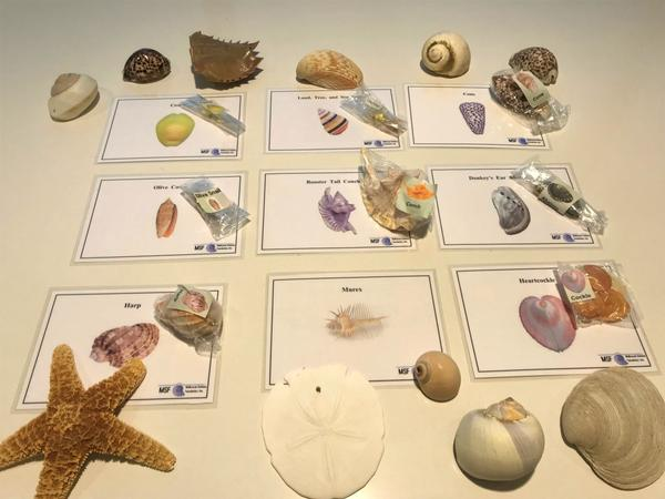 Science Saturdays Workshop: Under Sea Adventurers at Long Island Science Center