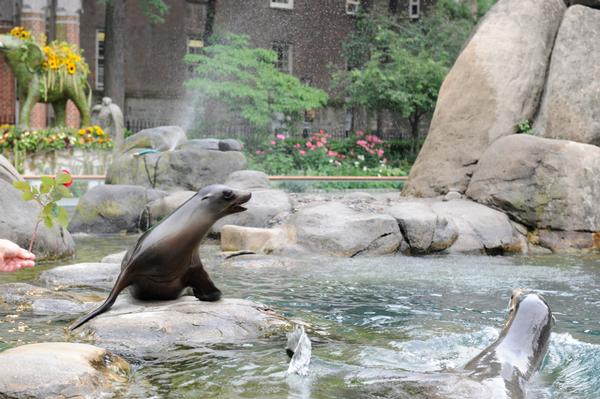DrawNow! at the Central Park Zoo at Central Park Zoo